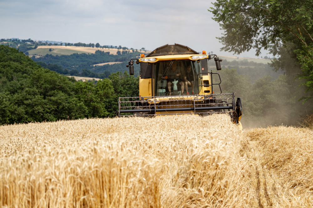 Moisson-agriculture-reportage